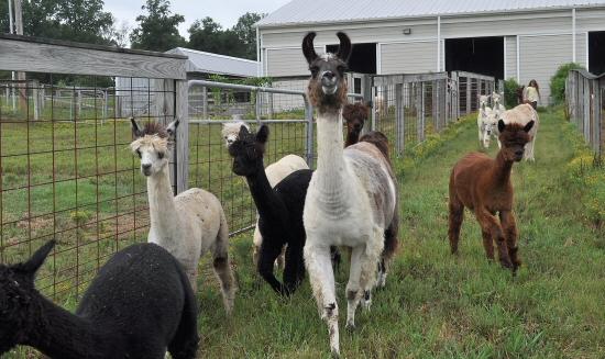Wilson Living Magazine - Hickory Bluff Farm