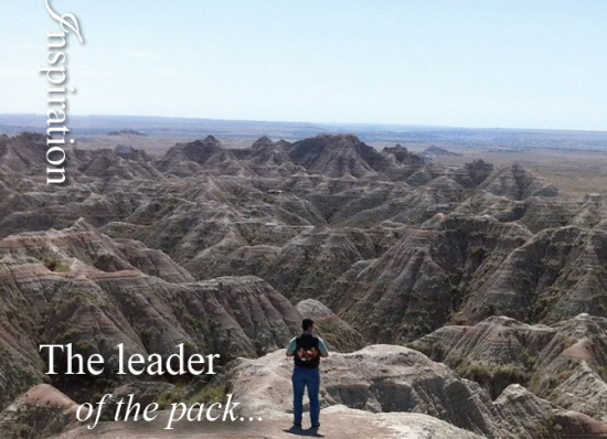 WLM - Leader of the Pack
