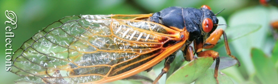 WLM - Cicadas