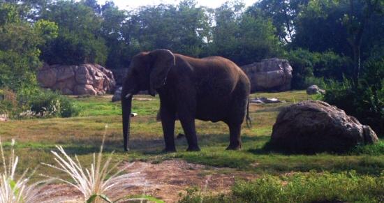 WLM - Nashville Zoo